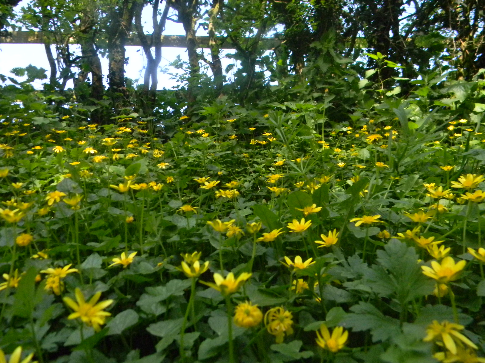 Celandine Petersfield to Liss