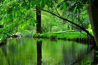 Nature in Spring, Bois de Vincennes Paris