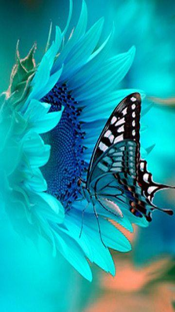 Blue Butterfly Nokia Phone Wallpaper 360x640 Syed Ali