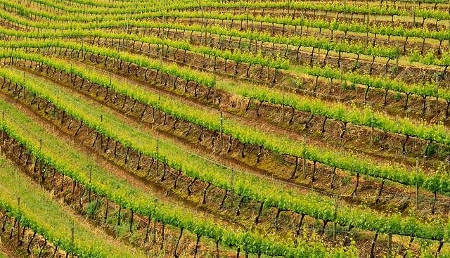 Capetonian Wineland