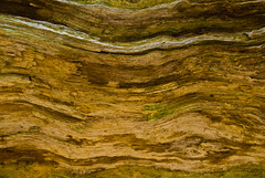 Wood texture wave