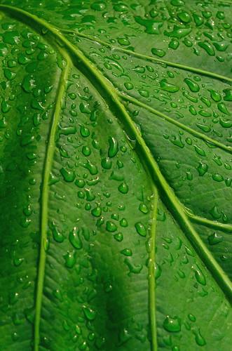 shreveport louisiana leaf tropical waterdroplets green leaves downtownshreveport
