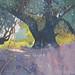 Olive trees, Kefalonia