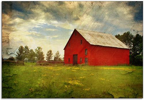 red field grass barn rural farm textured buttercups