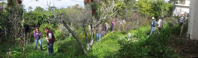 IMG_3047_4 110213 permaculture backyard santa barbara ICE rm stitch98