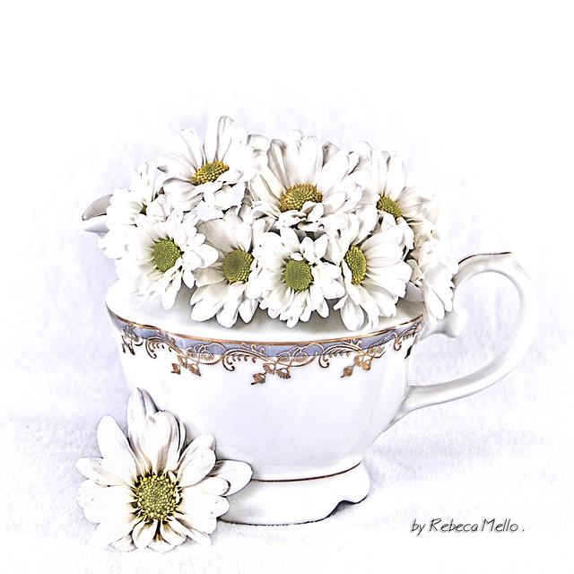 White daisies..