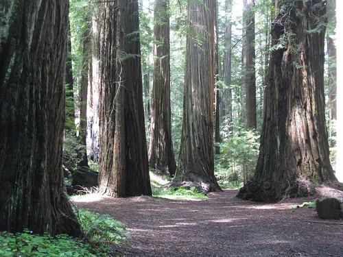 california statepark park vacation northerncalifornia mendocino redwoodforest montgomeryreserve