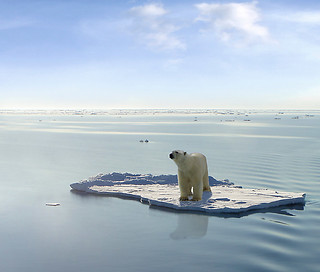 The last Polar Bear | by Gerard Van der Leun