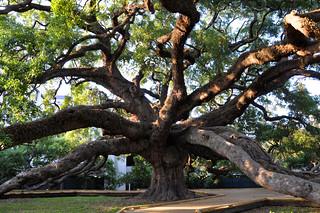 Treaty Oak in Jacksonville, FL | by James Willamor