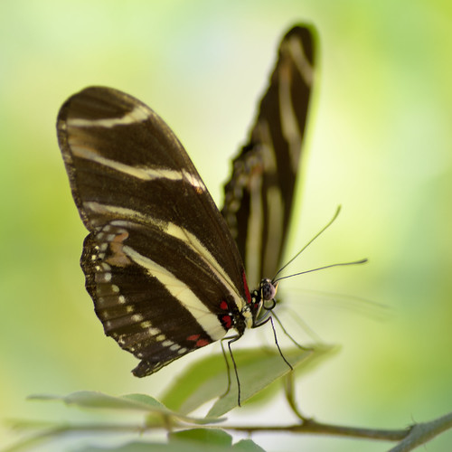 Butterfly | by Joel  Olives