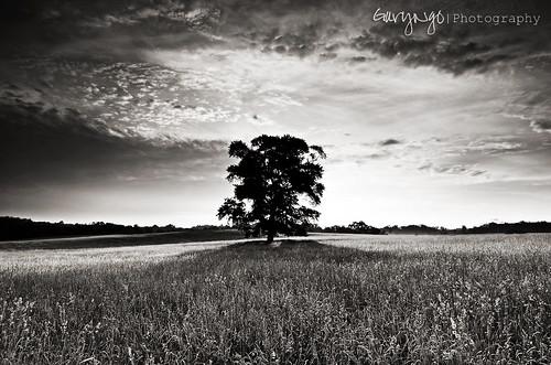 sky bw field clouds nikon explore lonetree monochorme d7000