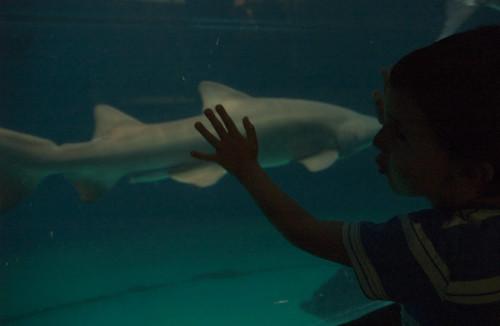 Filippo e lo squalo