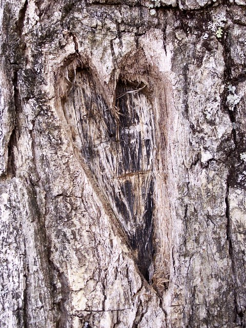 love for trees