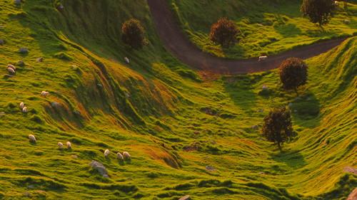 new morning newzealand seascape sunrise landscape dawn scenery mt zealand nz northisland bop tauranga bayofplenty manganui