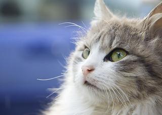 cat | by belashka