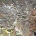 Výhled z lanovky na Owakudani, foto: Vladimír Šťastný