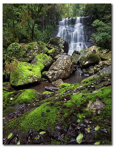 green canon landscape waterfall moss rainforest rocks sigma australia wideangle nsw aussie aus 1020mm manfrotto northernnsw eos450d 450d borderrangesnationalpark bestofaustralia sorenmartensen selvafalls