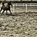 Arabian horse by Ali Haidar