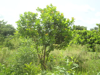Ghana woodland   by The Alliance of Religions and Conservation