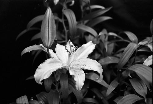 Flower Park 02-04-2011 DD-23 (4) | by yubokumin