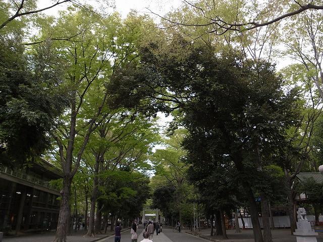 <p>b)新緑の参道</p>
