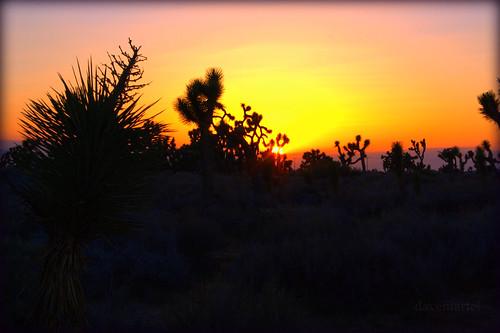 california sunset canon eos rebel desert dusk mojave lancaster xs joshuatrees goldensky yellowsky davidmartel 1000d