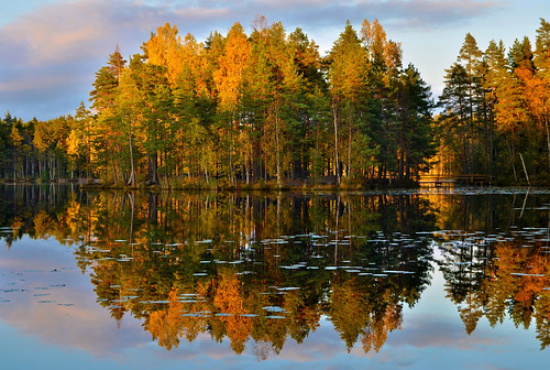 autumn sunset island colorful color forest pond pine tree trees nuuksio national park evening espoo finland
