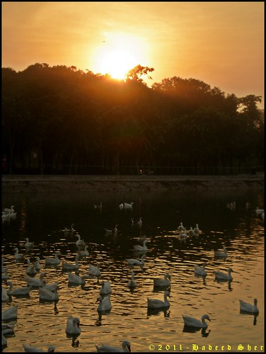 sunset duck paddle ducks olympus lahore waterpond mygearandme lahorewildlifesafari