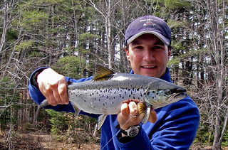 Sebago Spring Salmon | by Maine River Guides