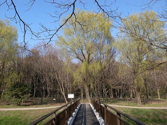 <p>c)柳の若葉きれいでしょ~、手前に写ってる木の新芽が見えますか!?<br /> 春ですね。</p>
