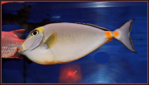 fish flower swim canon aquarium restaurant tank elite fin lockkey floridal flutterbye216