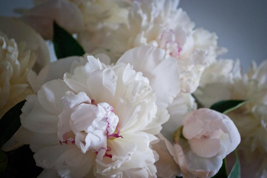 Beautiful and soft image!!!  DSC_3898