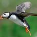 UK Wildlife - Birds