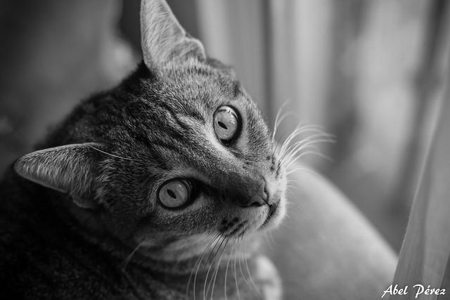 Alfie mirando