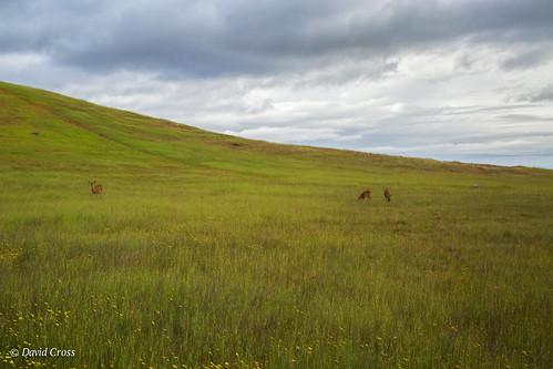 california canon5dmarkiii canonef24105mmf4lisusm clouds edgewoodpreserve landscape lightroom5 muledeer sanmateocounty topazsw