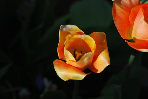 orangeFromTop_20110409_1 | by faeparsons