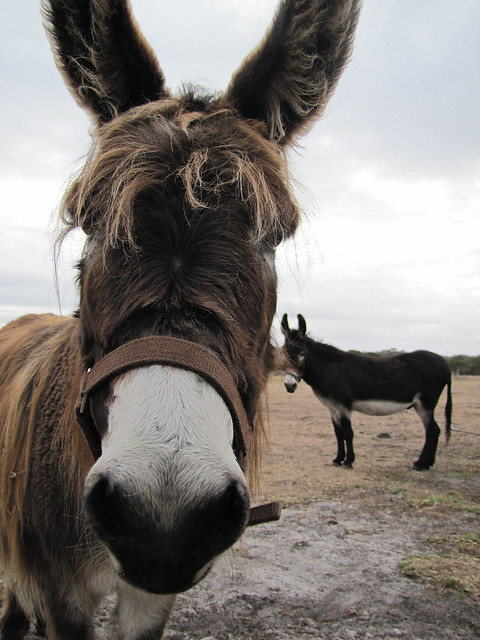 Donkey Perspectives - Red Moon Sanctuary, Redmond Western Australia