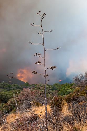 arizona usa az wildfire waldbrand huachucamountains cochisecounty ashcanyon monumentfire