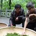 Jasmin and Mr Tang looking the Long Jing Shi Feng tea leaves
