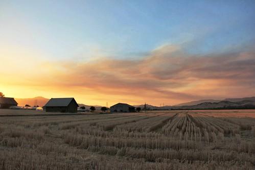 sunset northerncalifornia farm solanocounty suisunvalley rockvilleroad castanedabrosproduce
