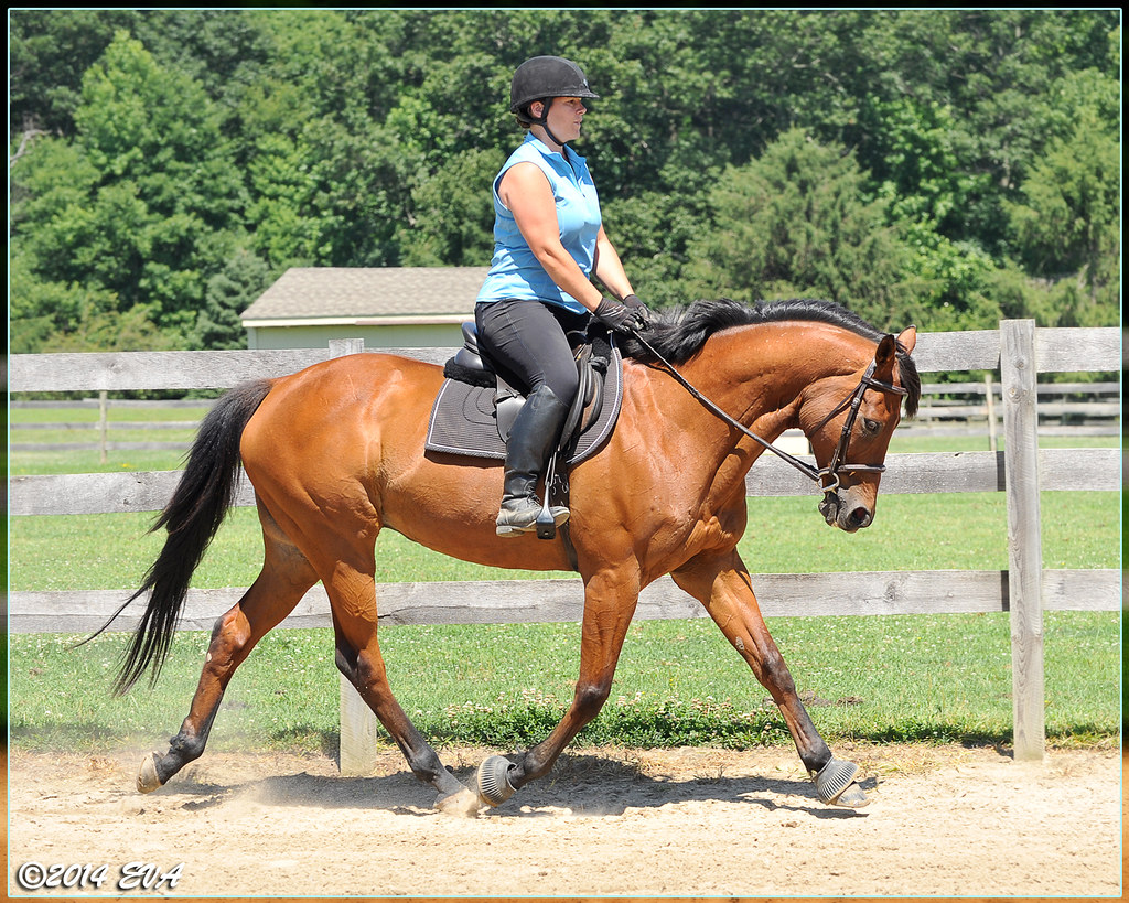 He's behind the vertical, but I like how elastic his trot … | Flickr