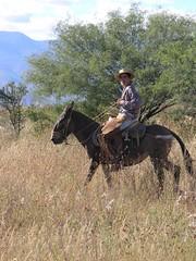 Vaquero cerca de San Rafael de las Tablas, Zacatecas, Mexico