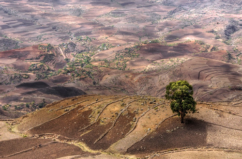 africa tree landscape sony north farmland east hills single farms lonely ethiopia alpha eastern 77 slt a77 the4elements
