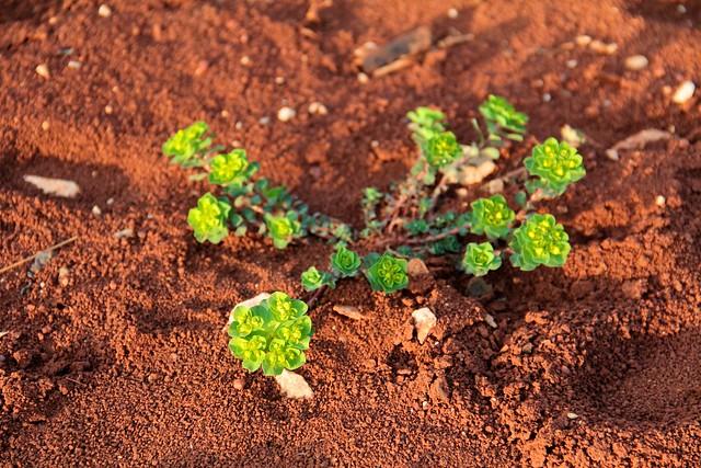 Red Soil 8