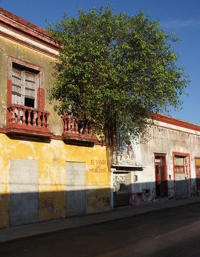 Mérida: a tree seems to grow out of a house wall // ein Baum scheint aus einer Hauswand zu wachsen