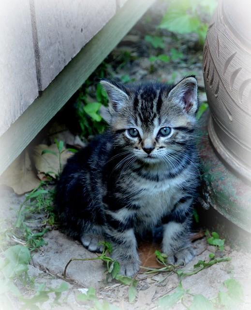 Ms. Kitty's Kittens