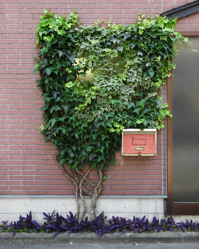 ivy letterbox