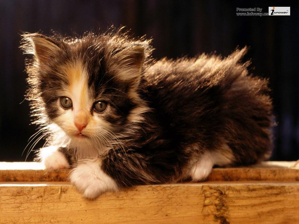 Cute Cat Baby Cute Cat Baby Matthew Smith Flickr