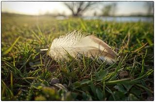 Feather-light... | by Meneer Zjeroen