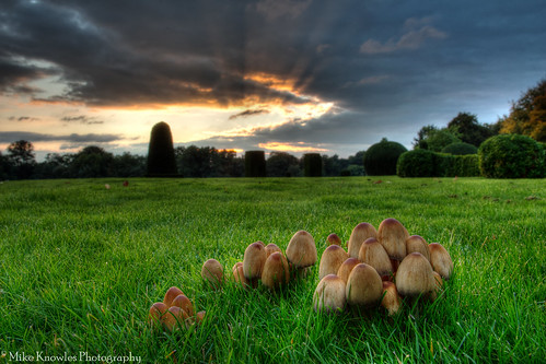 autumniscoming autumn fungi mushrooms sunset sudburyhall sudbury